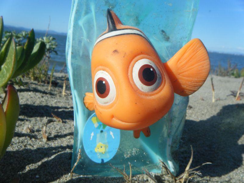 Nemo8