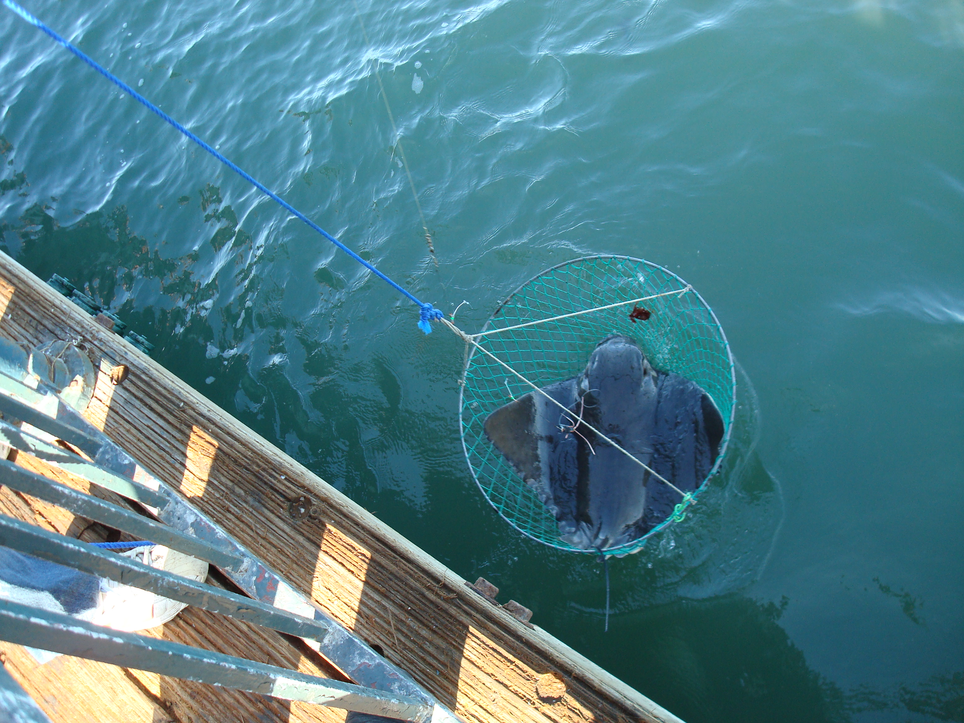 Incubating w friends come hatch learn chat w hosts for Pier fishing net
