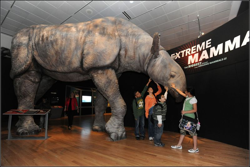 Indricotherium_RM