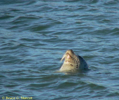 070305_floating_seal_04