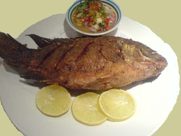 FishTilapia