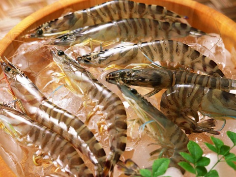 Black_Tiger_Prawn_Jumbo_Size